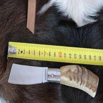 Mozzetta in muflone rustico cm 8