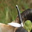 Hirtenmesser pattada cm 10 Roberto Monni Sardinien