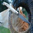 Hirtenmesser cm 10 vidder horn Vittorio Mura