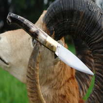 Sardinian folding knife cm 11