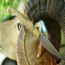 Coltello sardo in muflone biondo cm 10