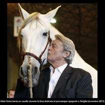 Arabian horse ebano Augusto Curreli